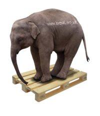 epal-pallet-elephant1