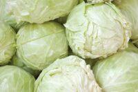 white-cabbage-picture-300