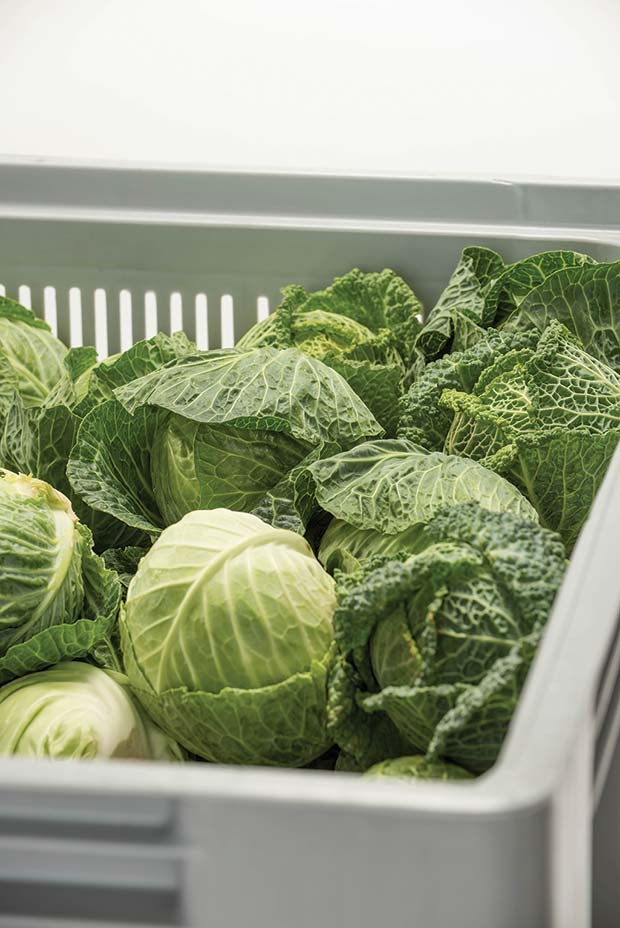 New-grocery-box-reduces-waste-and-keeps-produce-fresh-1