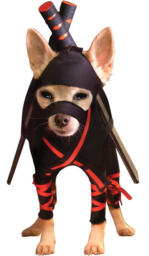Ninja-Chihuahua