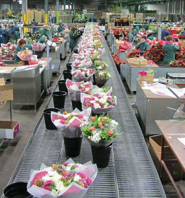 Morrison's-Flower-Processing-Plant