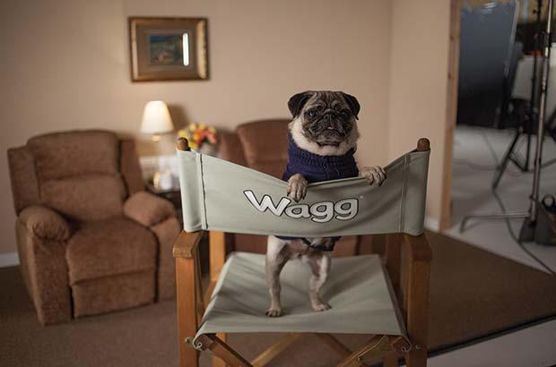 Dogglebox-Image