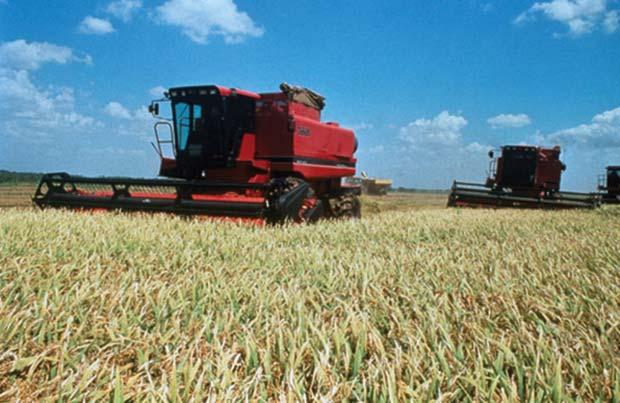p00112-harvest
